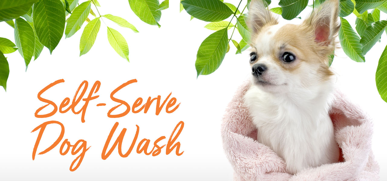 Selfe Serve Dog Wash