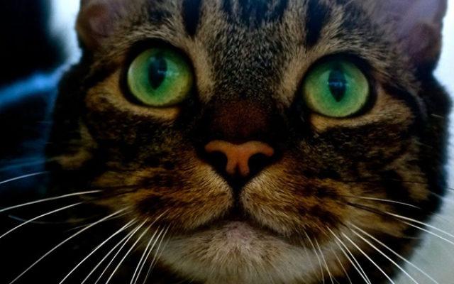 Luxe Cat Boarding