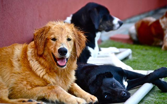 Dog Barding Luxe Pet Resort