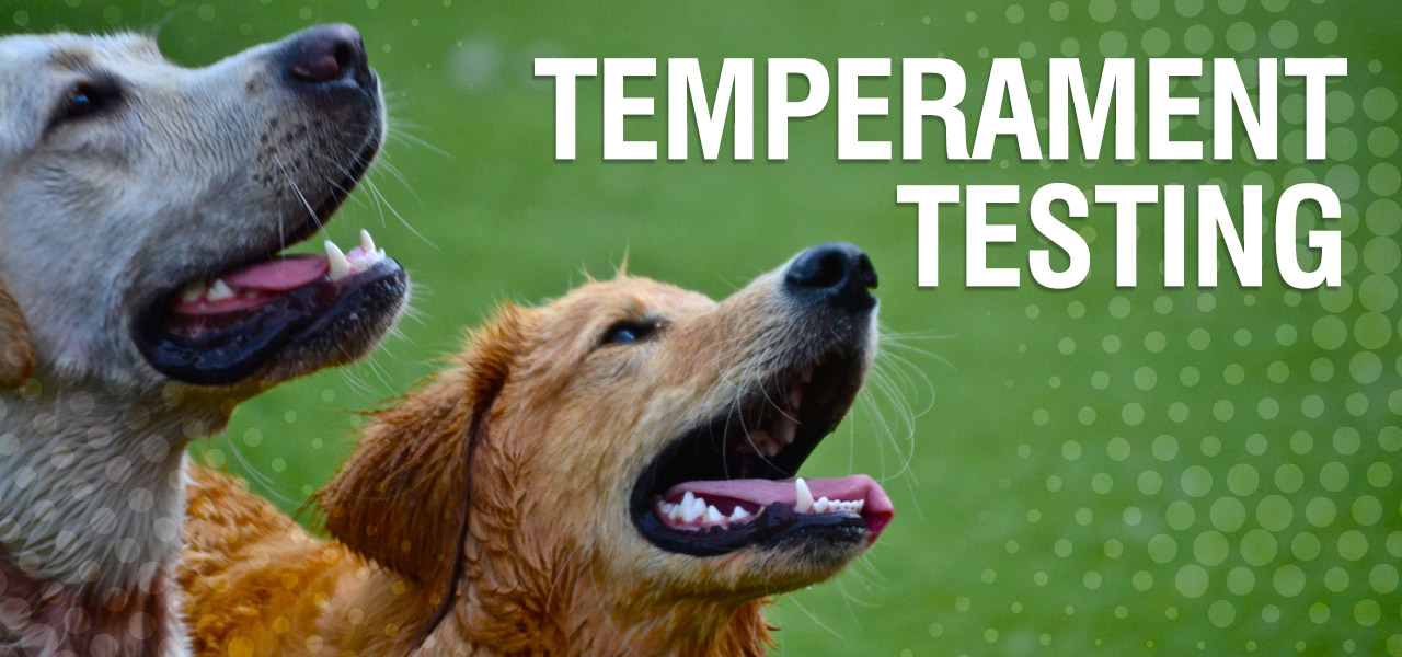 temperament-test
