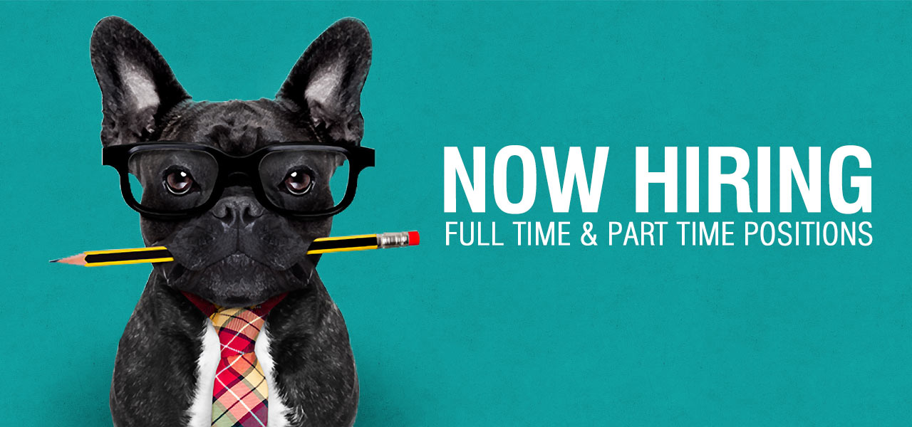 now hiring - Luxe pet resort
